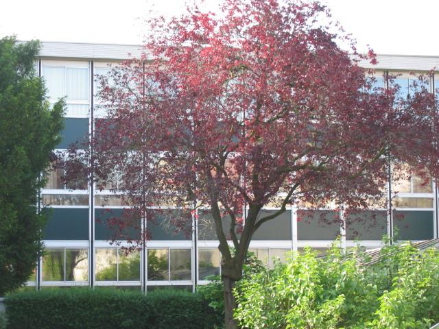Collège au printemps